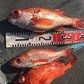 Atsushiさんの静岡県湖西市での釣果写真