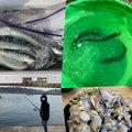 原69さんの大阪府泉南郡での釣果写真