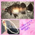 MitsuKenさんの福井県敦賀市での釣果写真