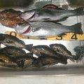 MasaKawaさんの福岡県糸島市での釣果写真