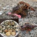かーずさんの神奈川県三浦市でのカサゴの釣果写真