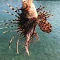 し〜さんの沖縄県沖縄市での釣果写真