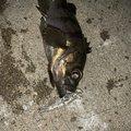 釣りにっく とみさんの愛知県知多郡での釣果写真