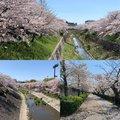 nippyさんの愛知県名古屋市での釣果写真