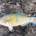 ケンさんの沖縄県国頭郡での釣果写真
