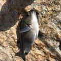 Shuさんの鹿児島県南さつま市での釣果写真
