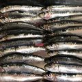 真鯛キング✨さんの大阪府泉南郡での釣果写真