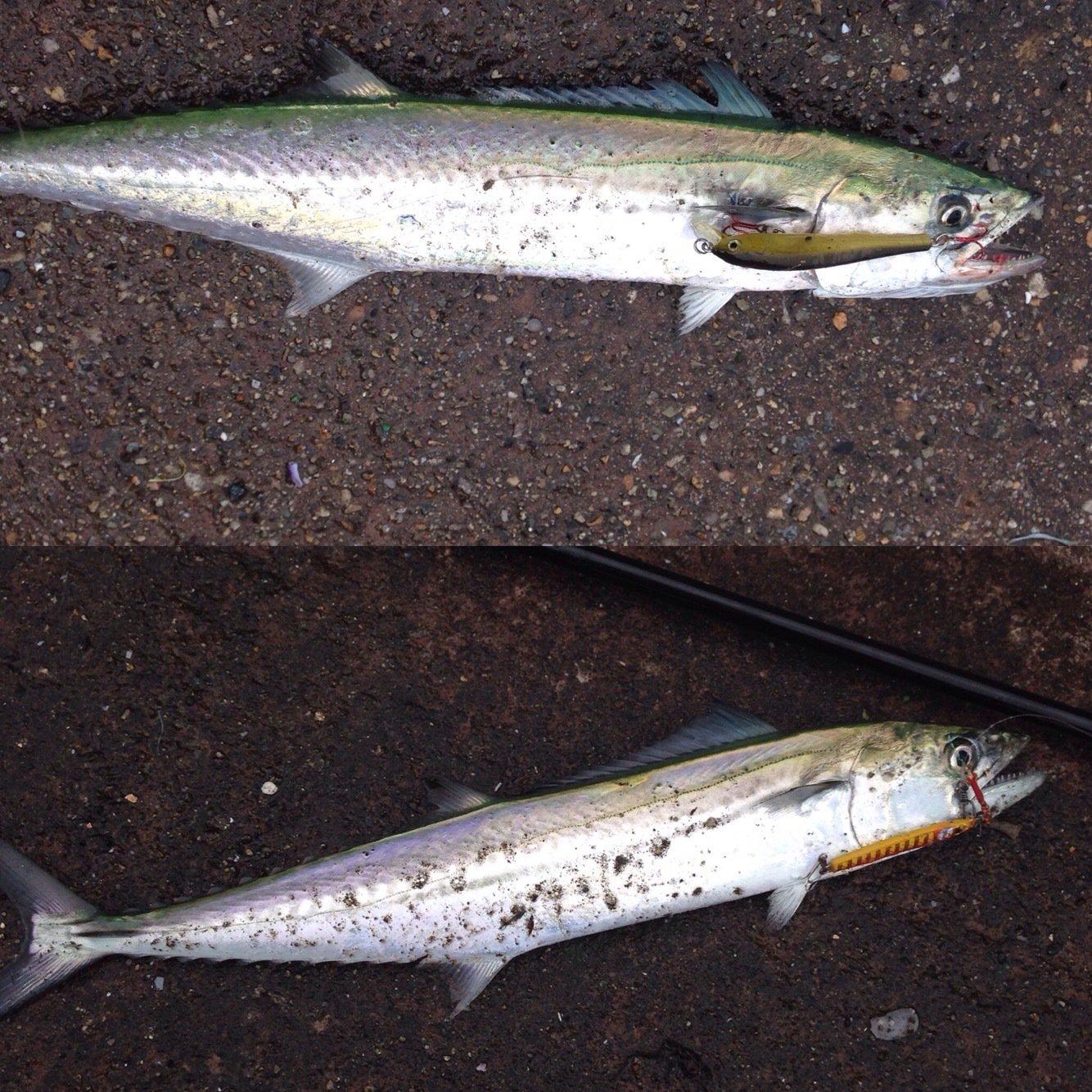Markey×F×Dさんの投稿画像,写っている魚はサワラ