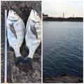 まーくんさんの兵庫県姫路市での釣果写真