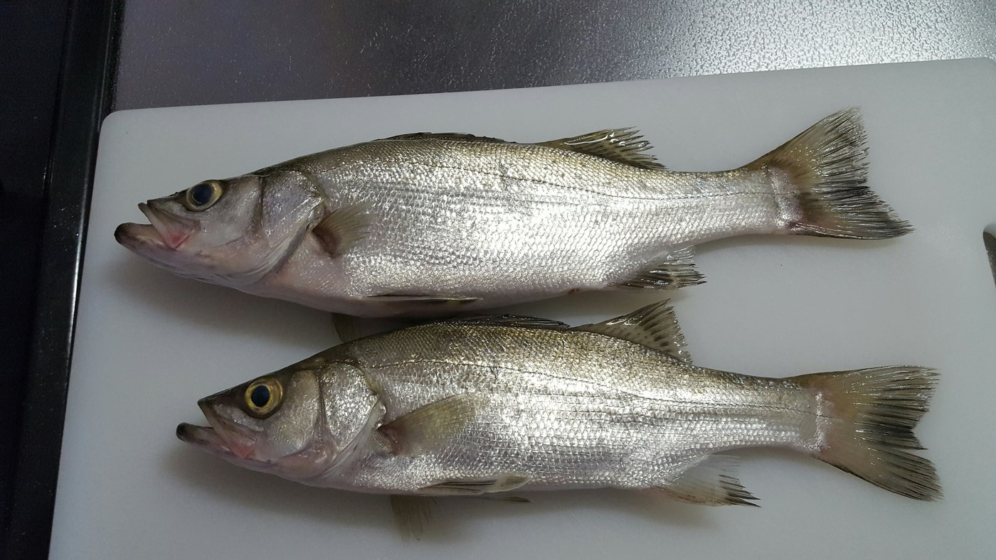 スパークルズ さんの投稿画像,写っている魚はスズキ