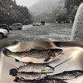 グッさんさんの神奈川県愛甲郡での釣果写真