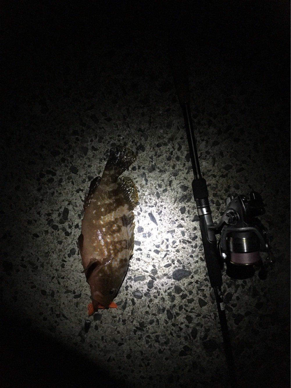 タカさんの投稿画像,写っている魚は