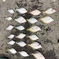 ちょもさんの北海道積丹郡での釣果写真