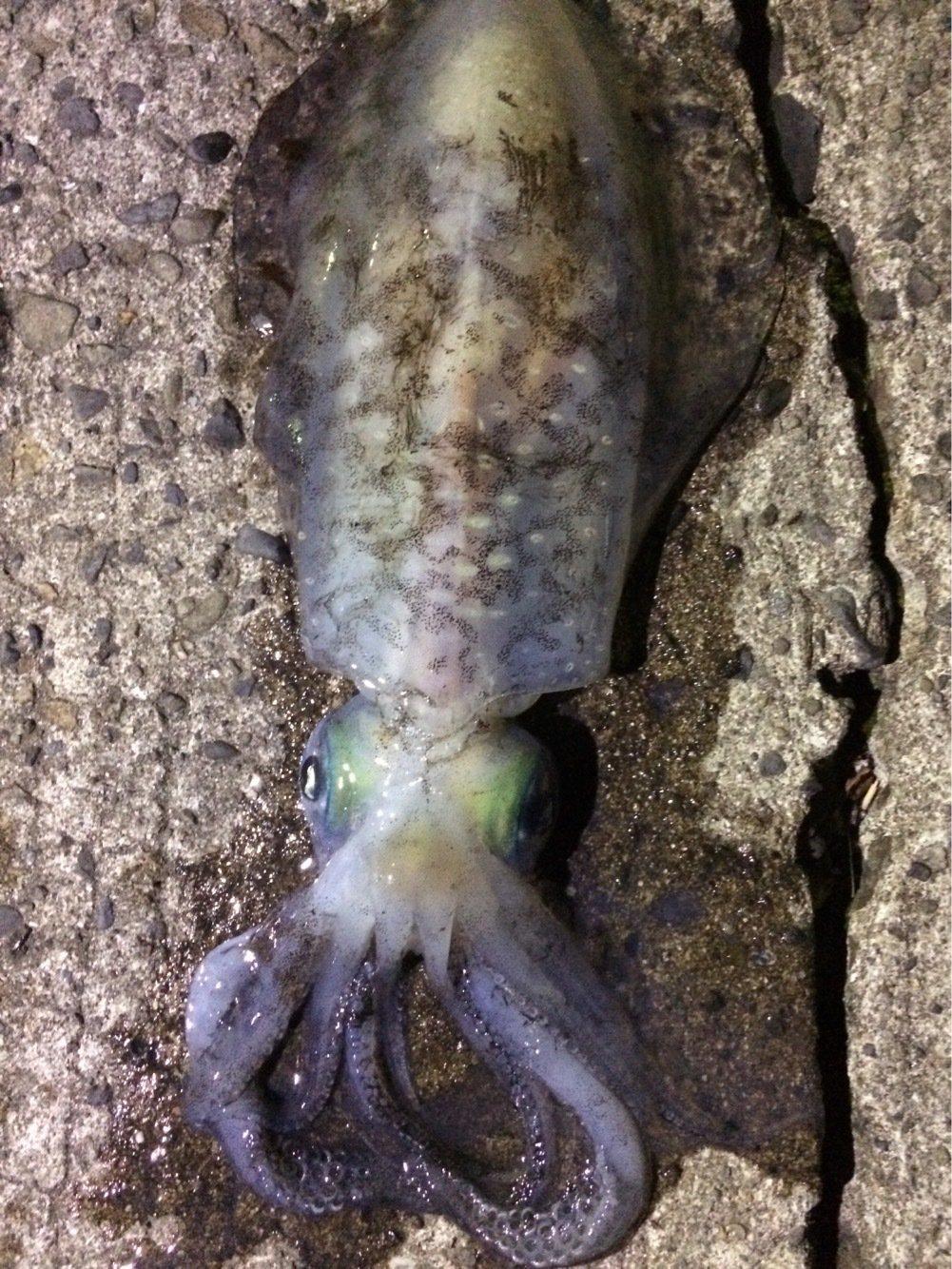 狩人さんの投稿画像,写っている魚は