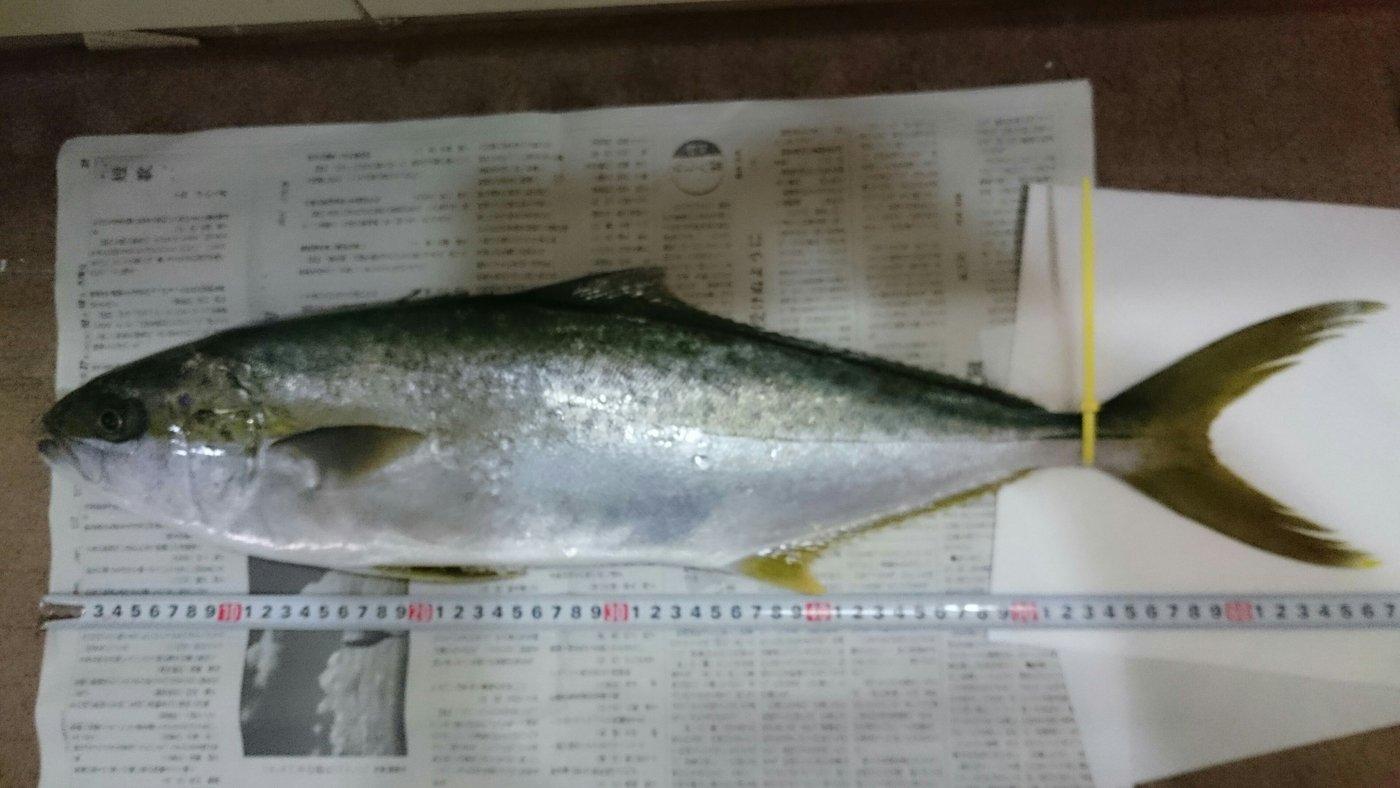 マロンさんの投稿画像,写っている魚はヒラマサ