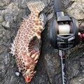 まいありーさんの鹿児島県枕崎市での釣果写真