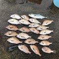 栞さんの千葉県山武市での釣果写真