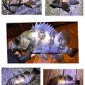 シャンさんの香川県高松市での釣果写真