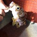きんたさんの香川県坂出市での釣果写真