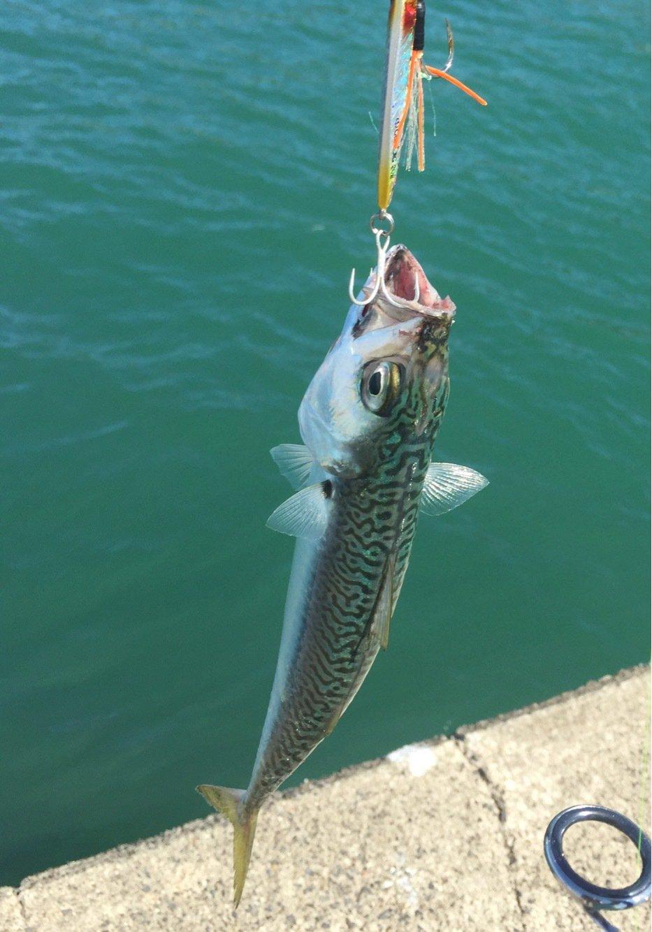 エメラルダス92さんの投稿画像,写っている魚は
