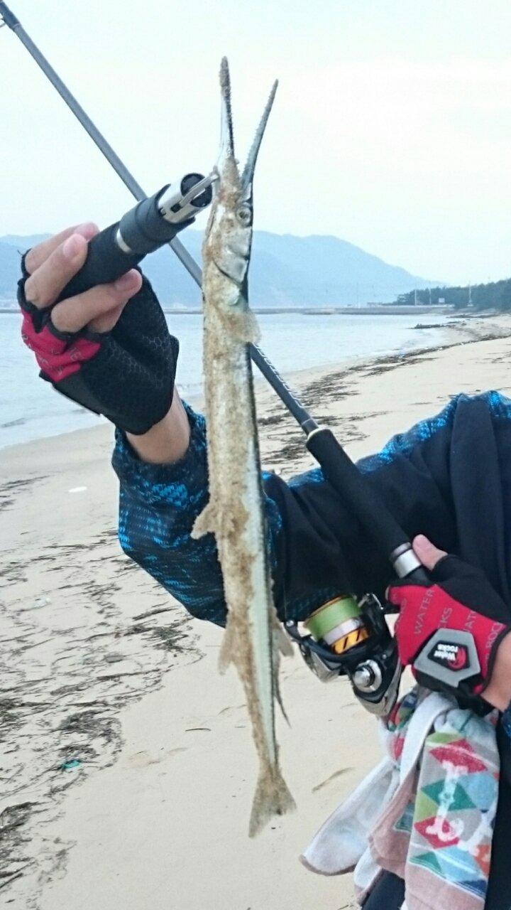 マロンさんの投稿画像,写っている魚はダツ
