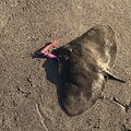 ショウさんの千葉県鴨川市での釣果写真