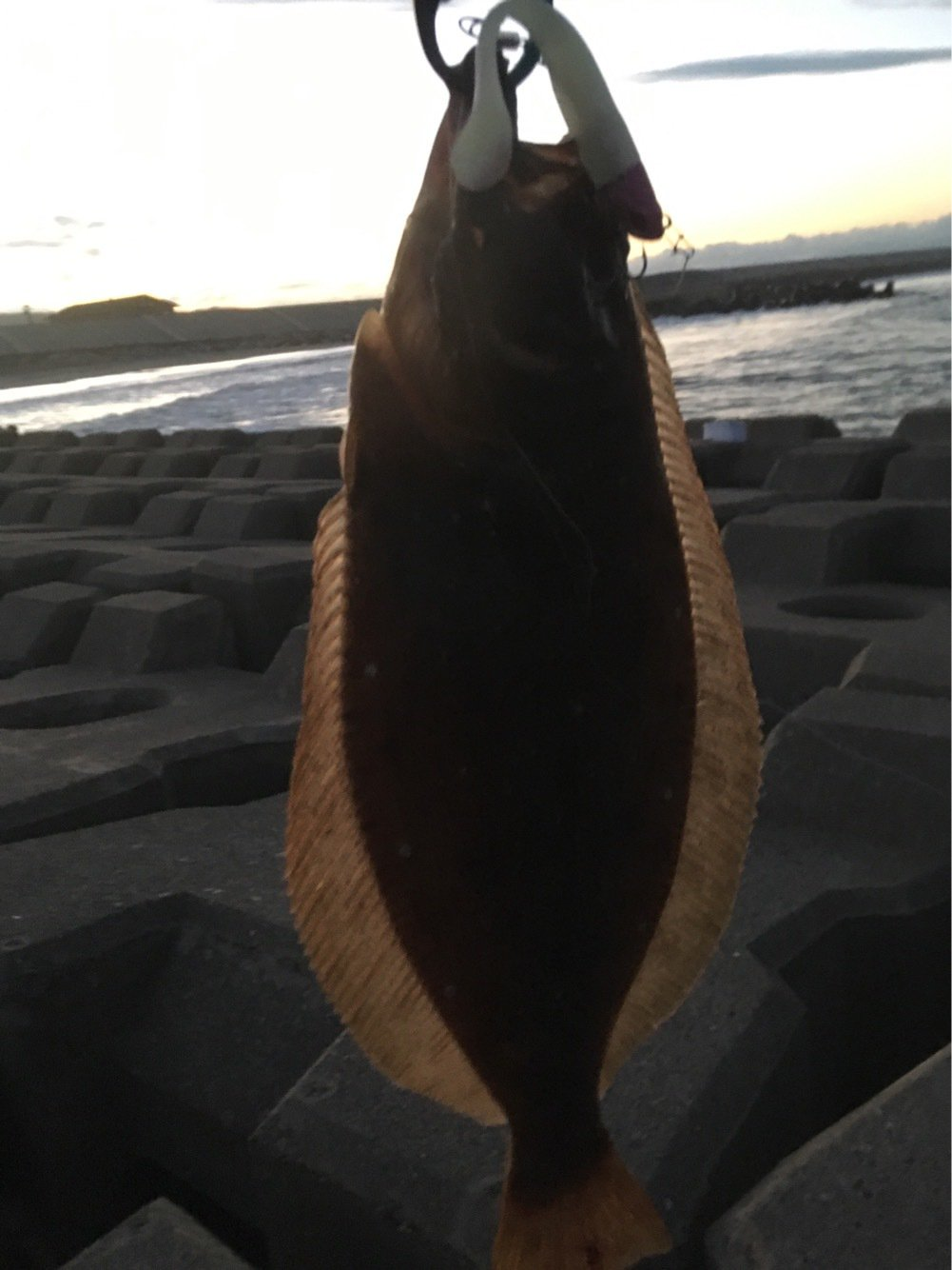 へたっぴ三ちゃんさんの投稿画像,写っている魚はヒラメ