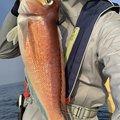 iKa.sumiさんのアマダイの釣果写真