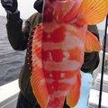 K I M Uさんの鹿児島県指宿市での釣果写真