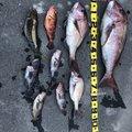 りゅうさんの青森県東津軽郡での釣果写真