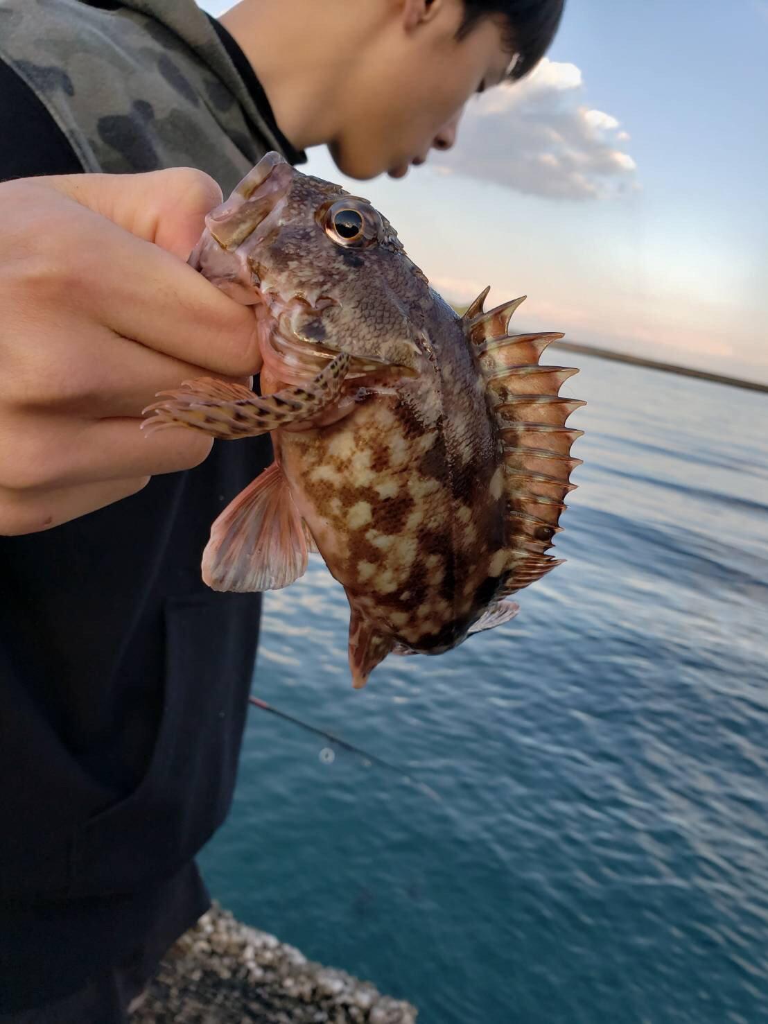 ゆめとさんの投稿画像,写っている魚はカサゴ