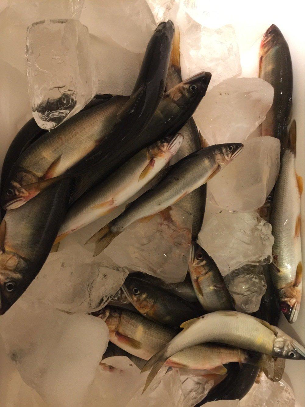 sayakaさんの投稿画像,写っている魚はアユ