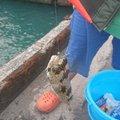フィンさんの沖縄県でのハリセンボンの釣果写真