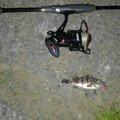 戸徒路さんのクロソイの釣果写真