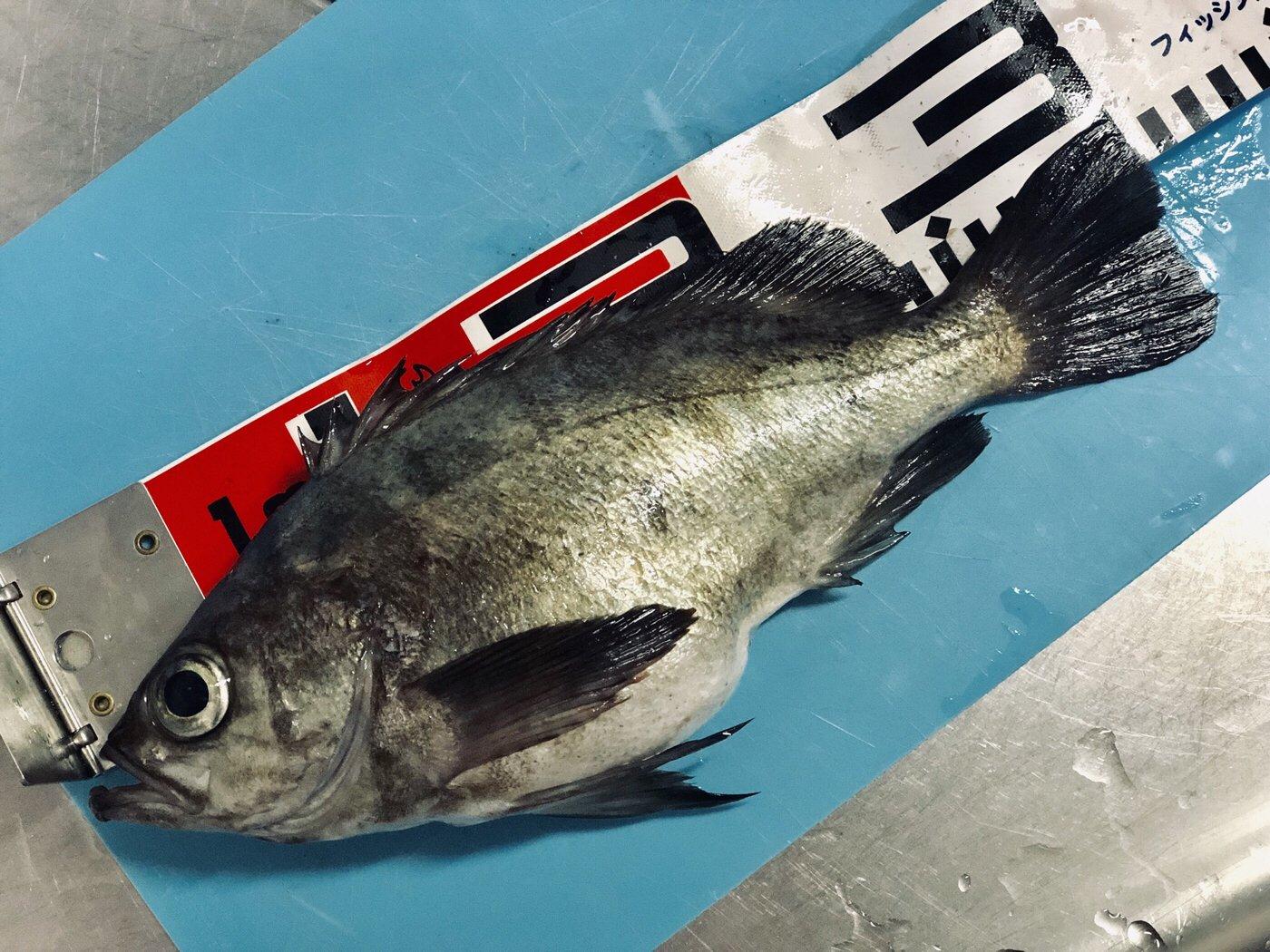 アーサーさんの投稿画像,写っている魚はメバル,