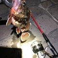 ノエルさんの静岡県湖西市での釣果写真