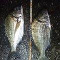 孤高の南国アングラーさんの鹿児島県奄美市での釣果写真
