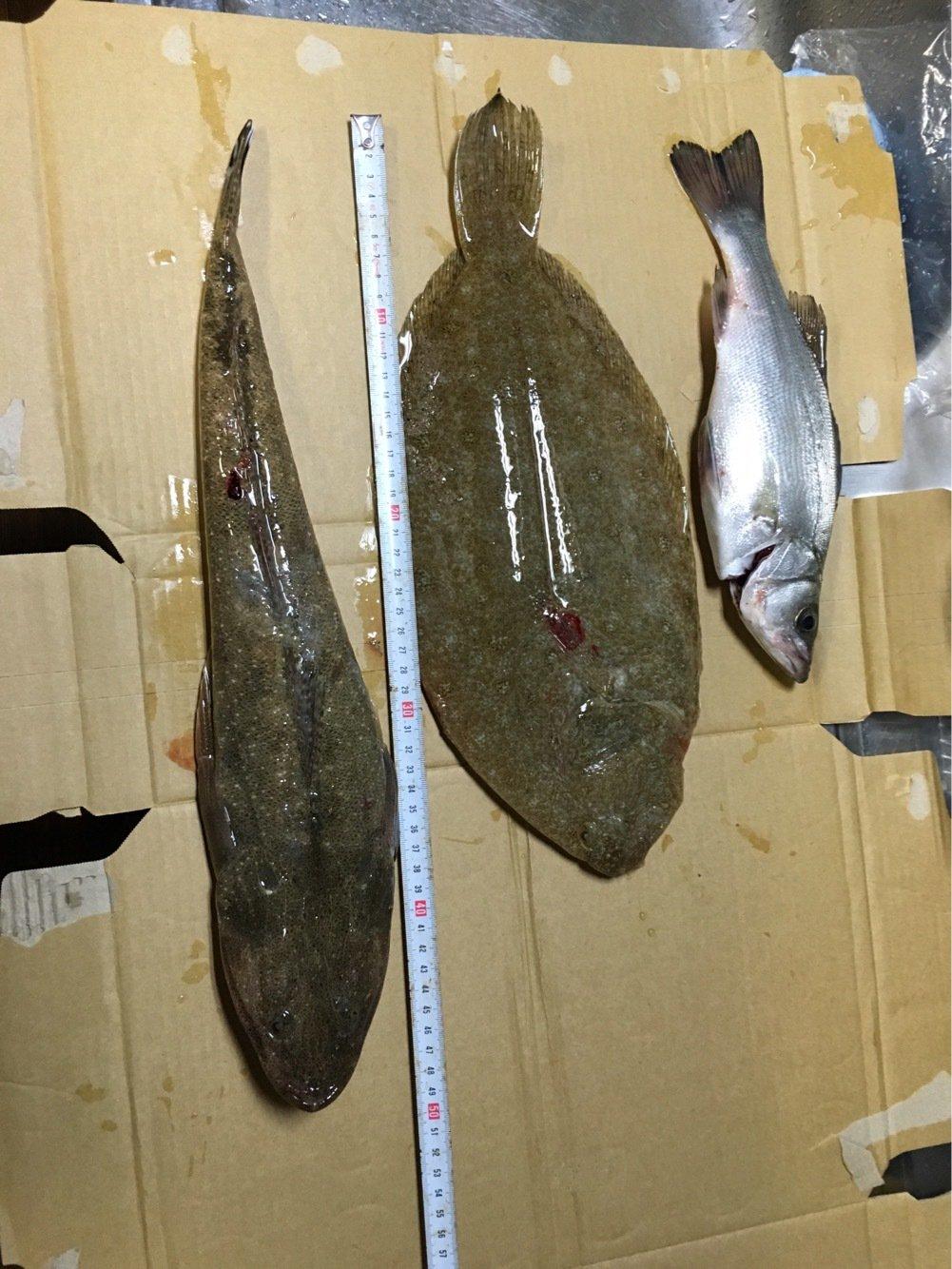 長飛丸さんの投稿画像,写っている魚は