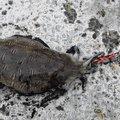 batayabataさんの鹿児島県いちき串木野市での釣果写真
