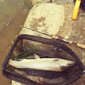 cool-0314さんの新潟県阿賀野市での釣果写真