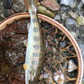 kappatoshiさんの奈良県高市郡での釣果写真