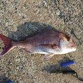 こがしゅうさんの鹿児島県垂水市での釣果写真