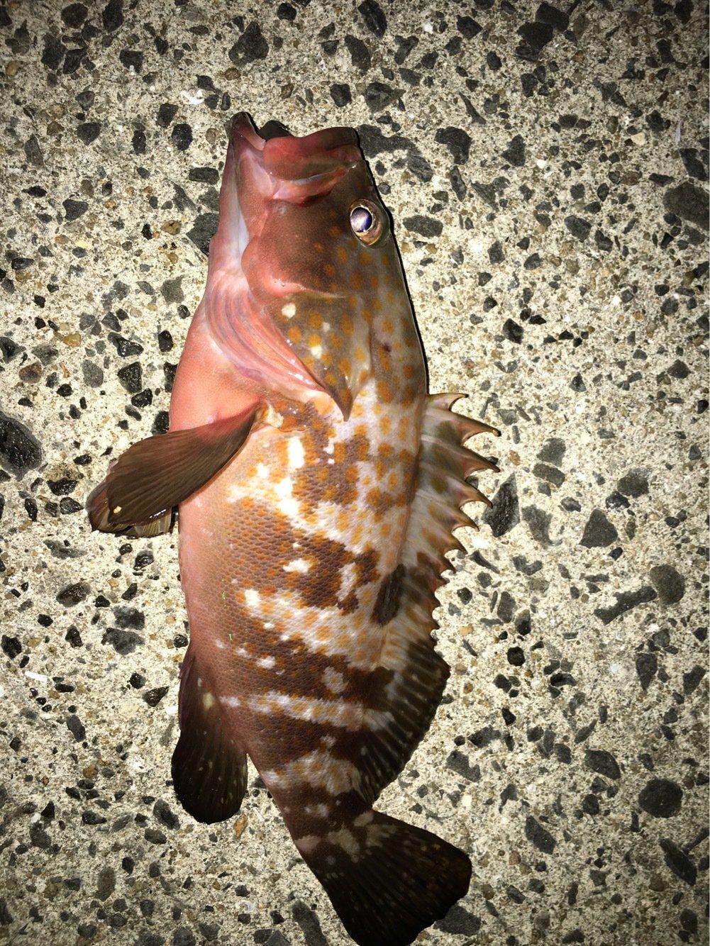 サボテンさんの投稿画像,写っている魚は