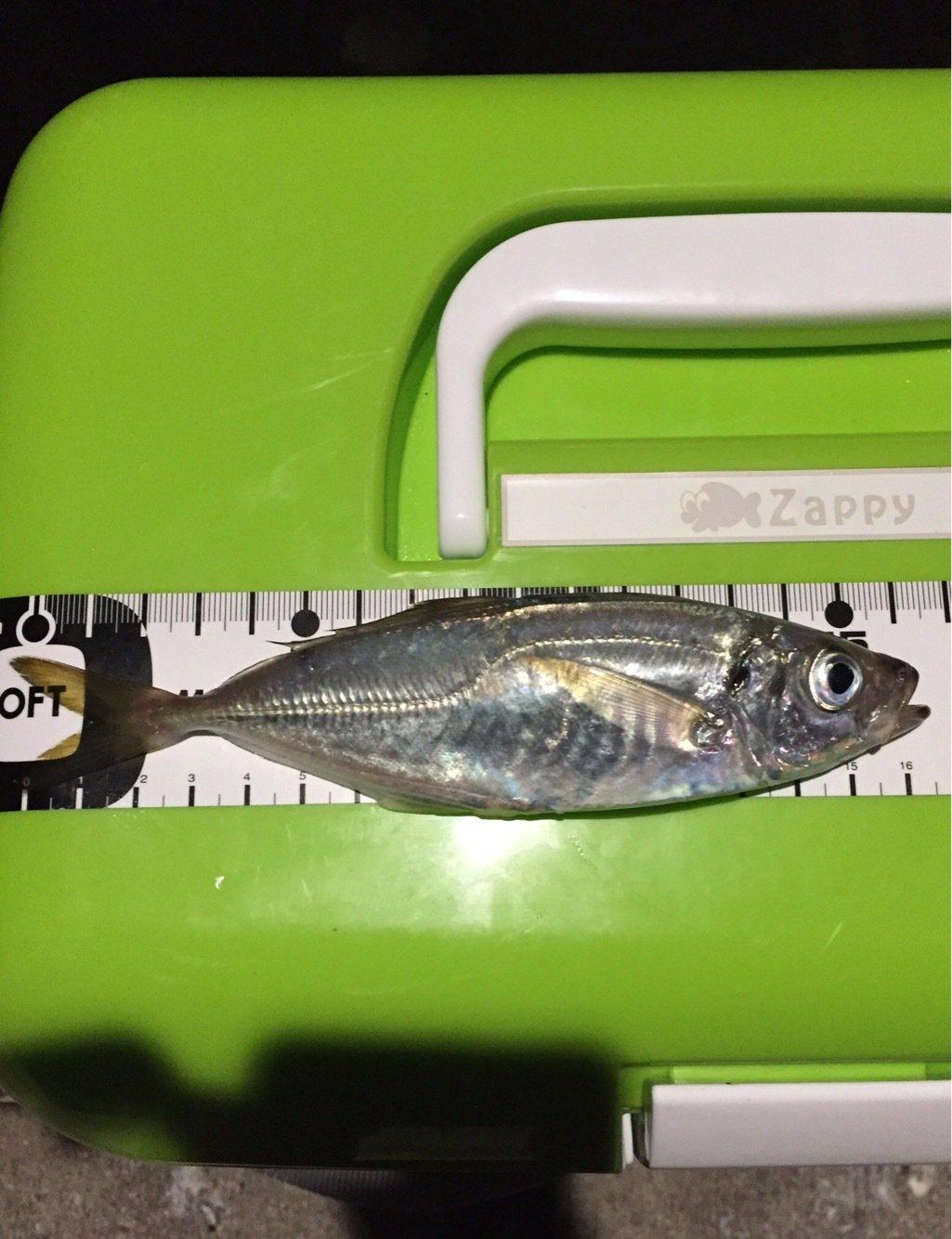マサちゃんさんの投稿画像,写っている魚はアジ