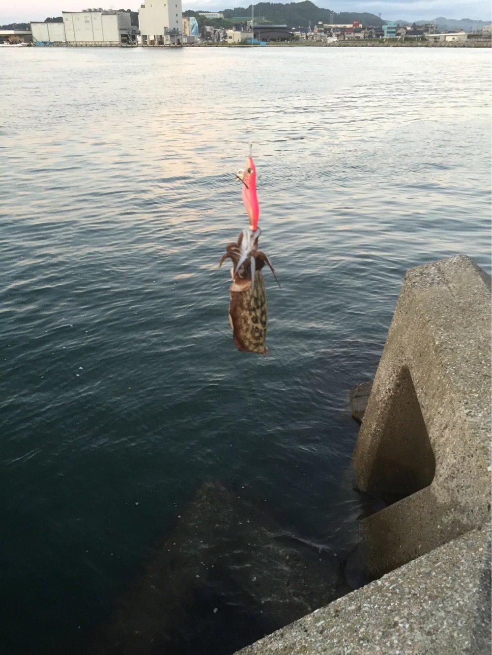 テリーさんの投稿画像,写っている魚はコウイカ