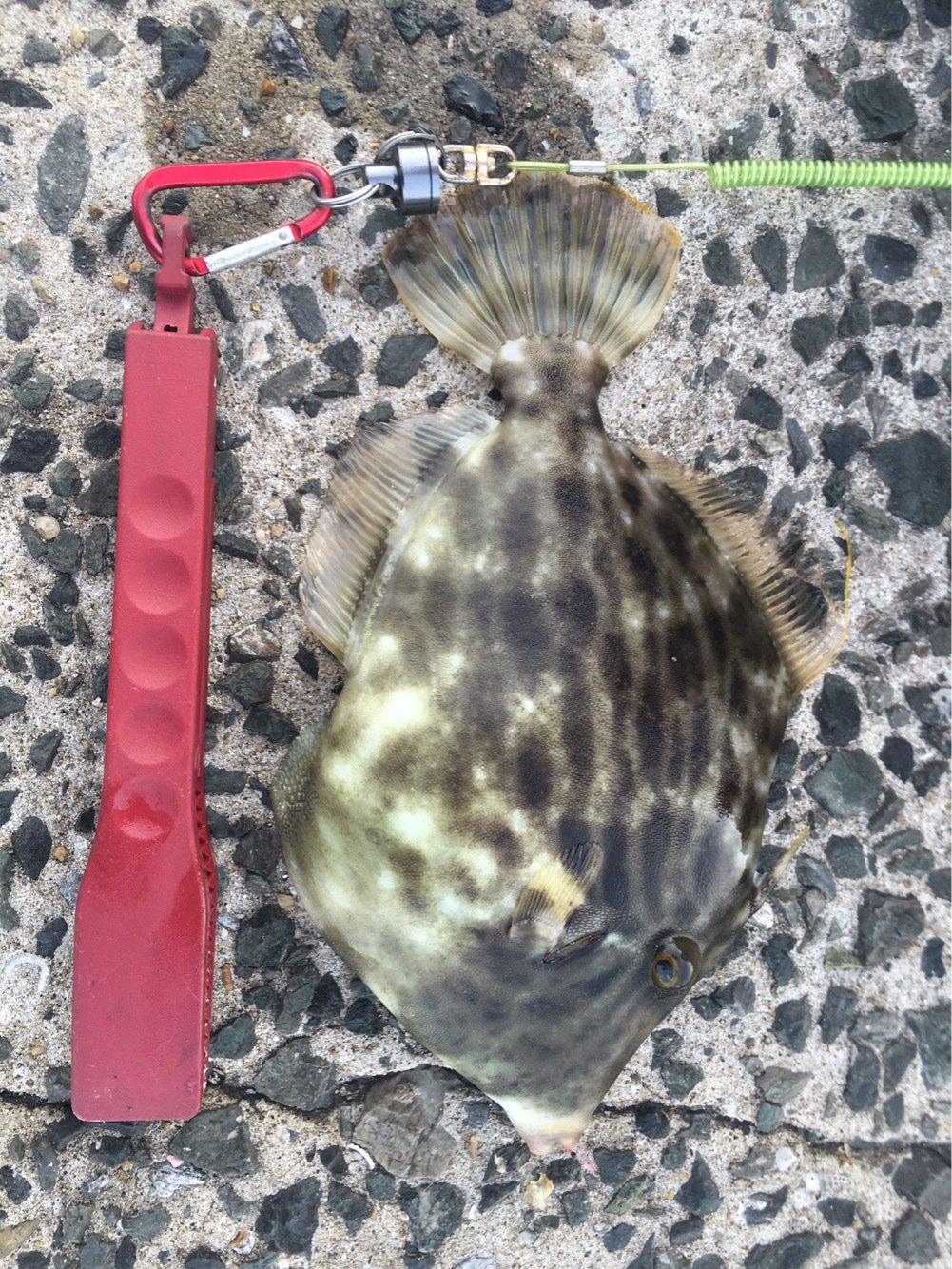 たかさんの投稿画像,写っている魚は