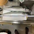 さめバイヤンさんの石川県金沢市での釣果写真