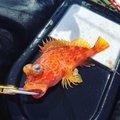 aloha-xxさんの静岡県賀茂郡での釣果写真