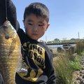釣りキチ中学生さんの埼玉県でのブルーギルの釣果写真