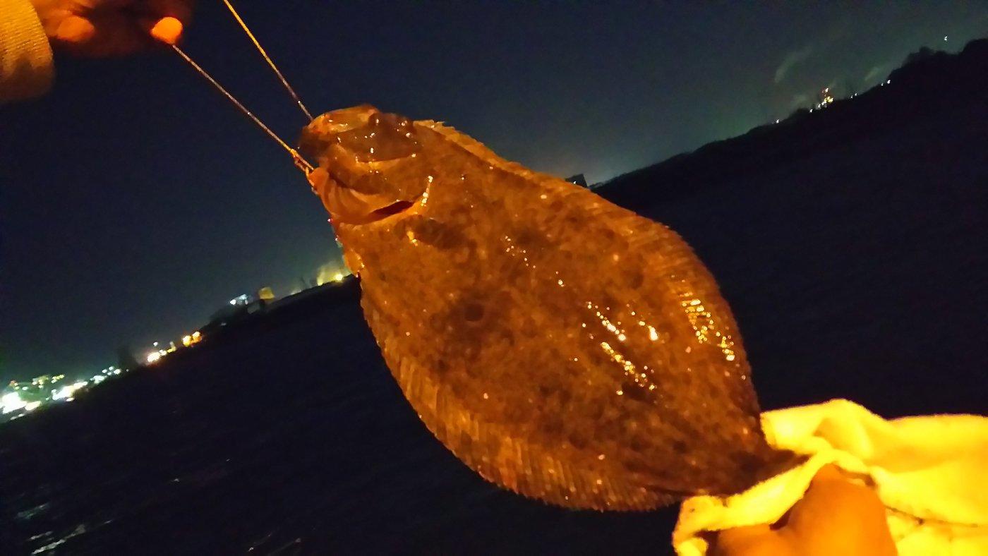 トラさんの投稿画像,写っている魚はヒラメ